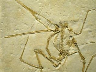 Ο Κρυπτοδράκων: ανακαλύθφηκε άγνωστο ως σήμερα είδος της οικογένειας των πτεροδακτυλιδών πτεροσαύρων