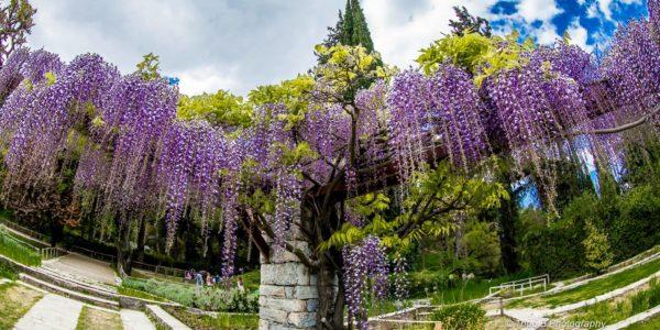 Φωτοεξόρμηση στο Διομήδειο Βοτανικό Κήπο