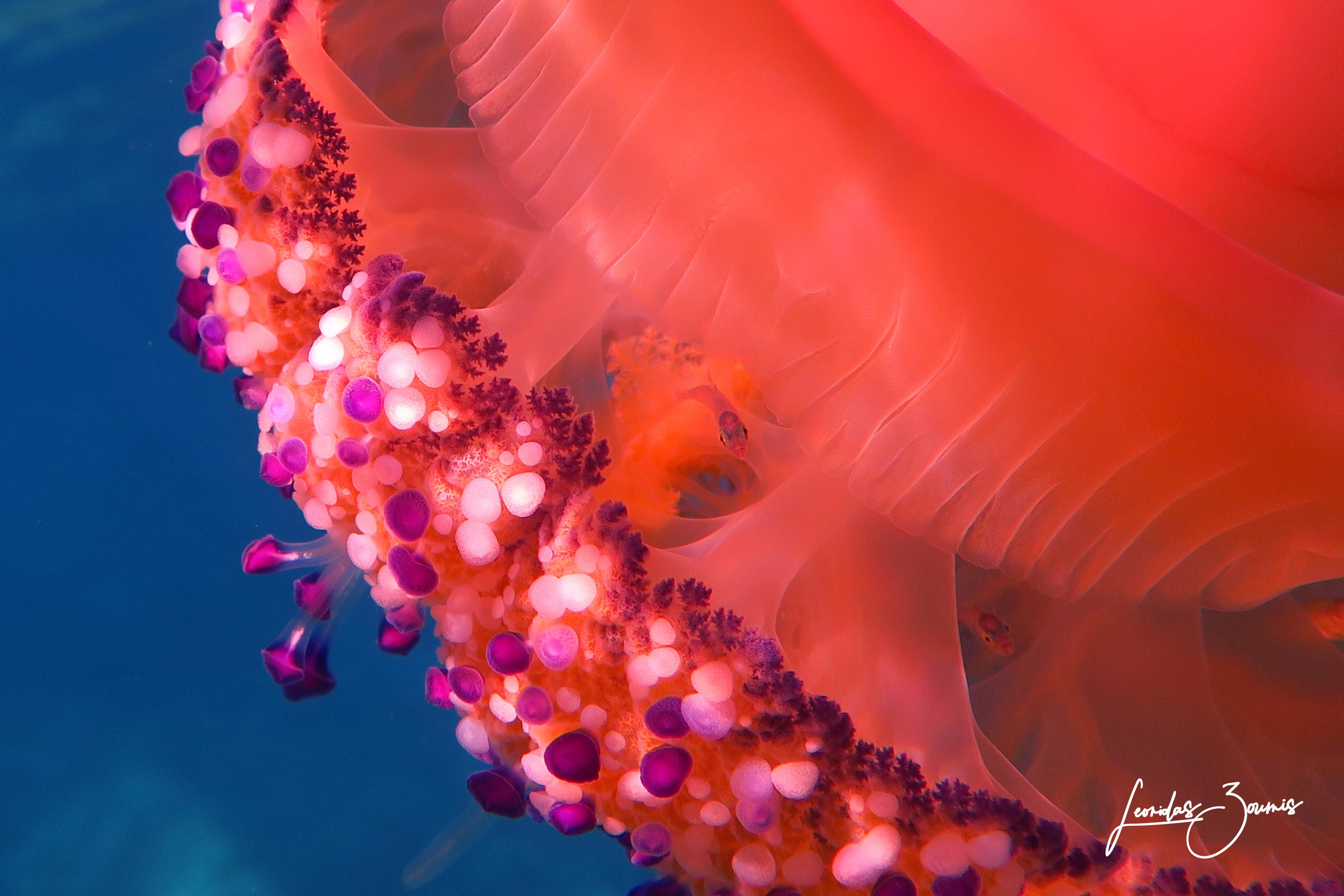Εισαγωγή στην υποβρύχια φωτογραφία (… του Λεωνίδα Ζουμή)