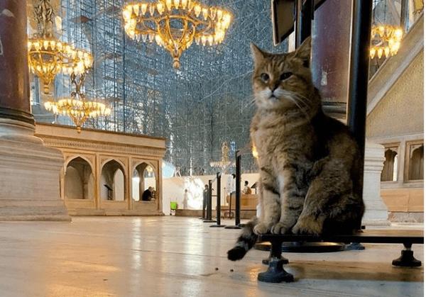 Τετράποδοι φρουροί στην Αγιά Σοφιά…της Μ. Μεταξά
